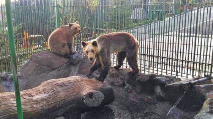 Two bears rescued from Albania find their new home in UK Zoo